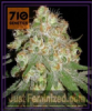 710 Genetics White Lady OG Fem 5 Weed Seeds